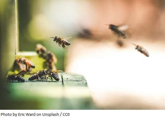 """Ceetrus Polska promuje bioróżnorodność w ramach kampanii edukacyjnej """"Świat pszczół"""""""